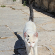 Adorable cats found just about everywhere you go in Greece.